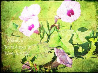 Enchanted gypsy garden and morning flowers 2011 056 copy